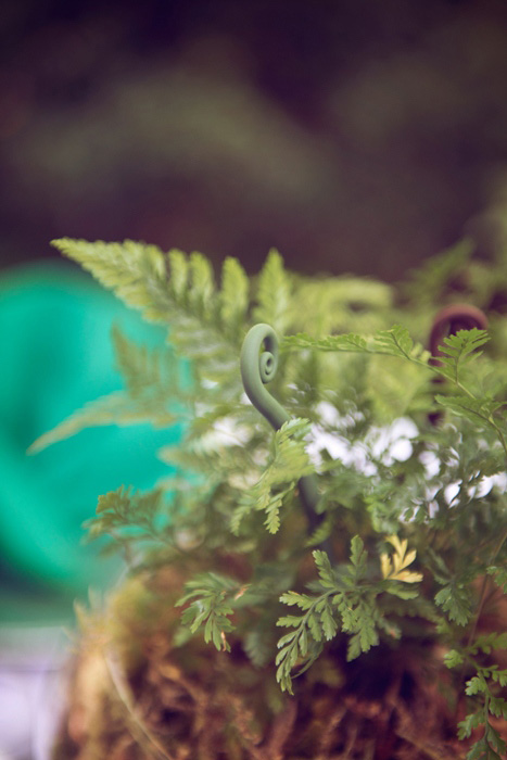 wedding ferns