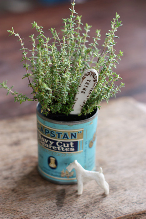 potted herbs in antique can