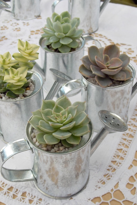 watering can favors