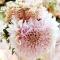 flower2 thumbnail