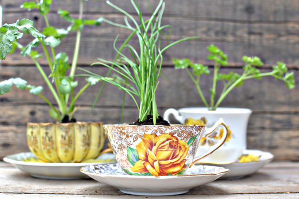 teacup herb favors