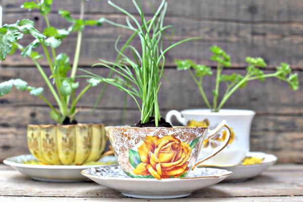 teacup herb favors