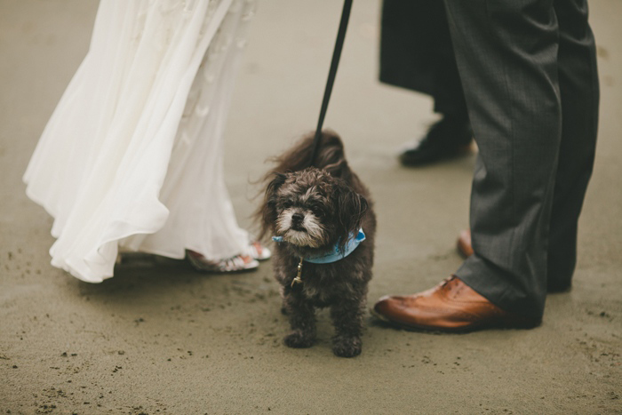 dog at elopement ceremony on the beach