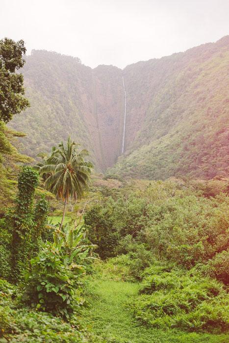 Lush Hawaiian landscape
