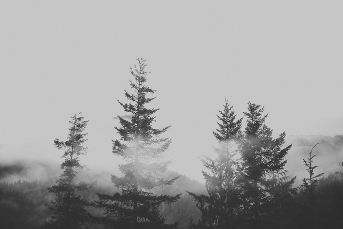 foggy Tofino Trees