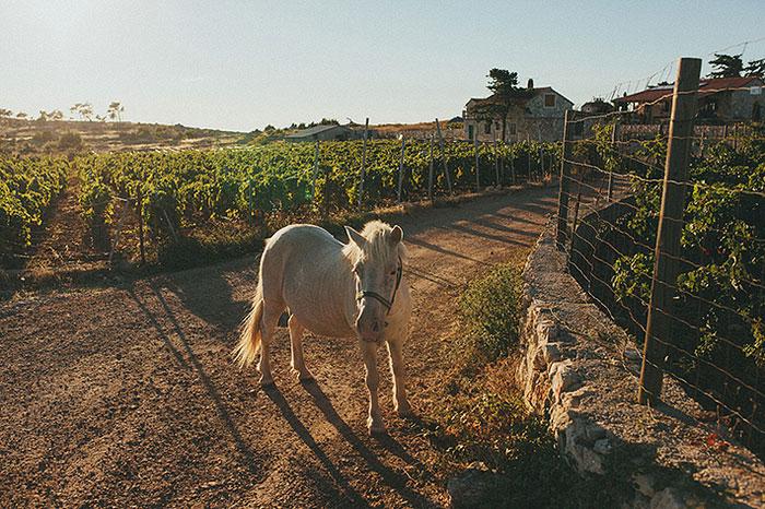 horse in croatian countryside