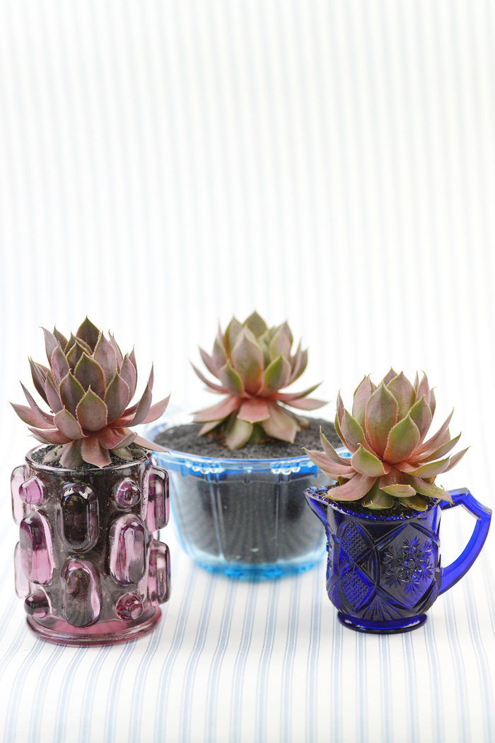 wedding-succulents-5