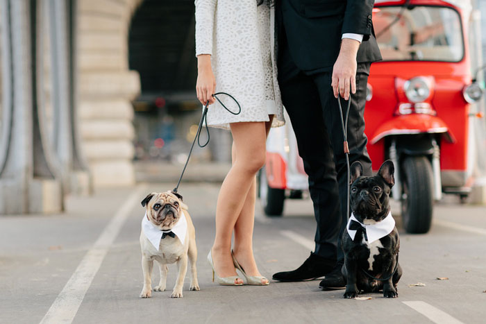 wedding dogs in Paris