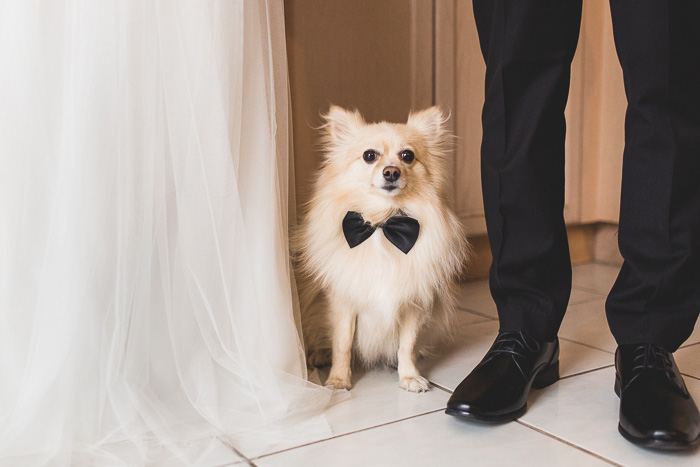 bride and groom with dog wearing bow tie