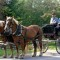 intimate-weddings-inn-at-weston-vt-horse-drawn-carriage thumbnail