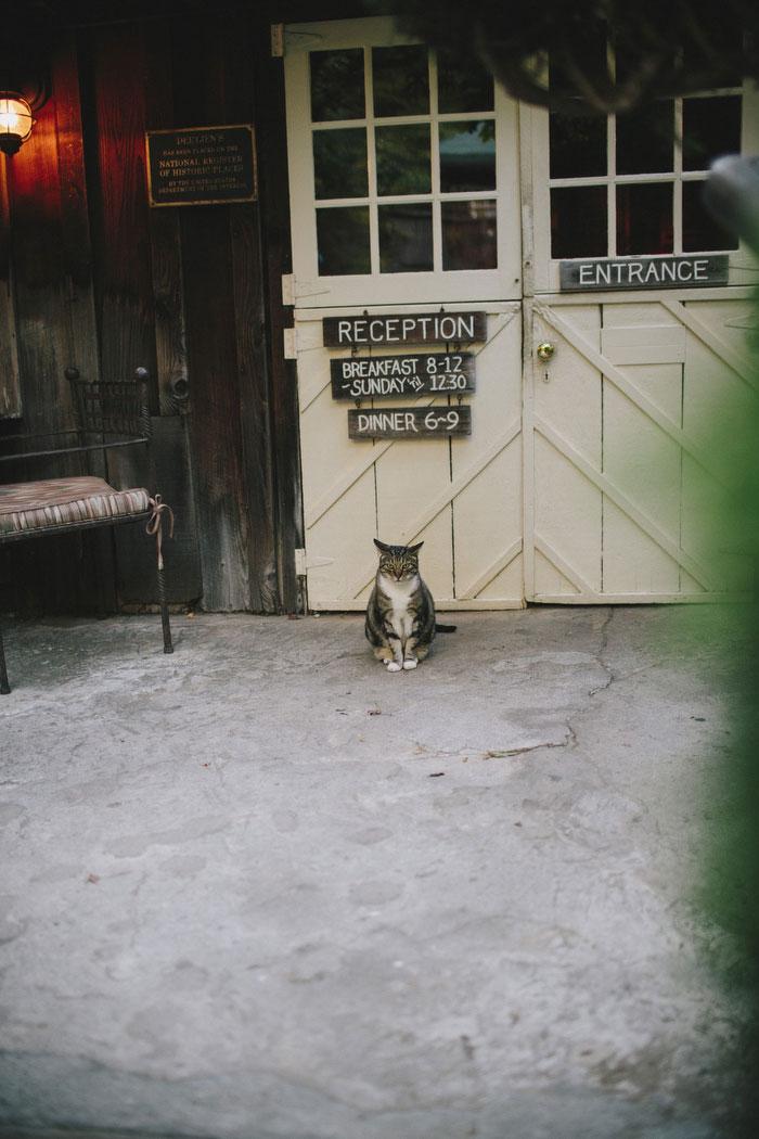 cottage cat