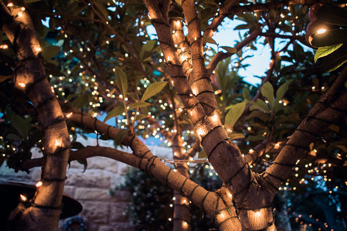 tree wrapped in twinkle lights