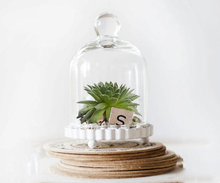 cloche-terrarium