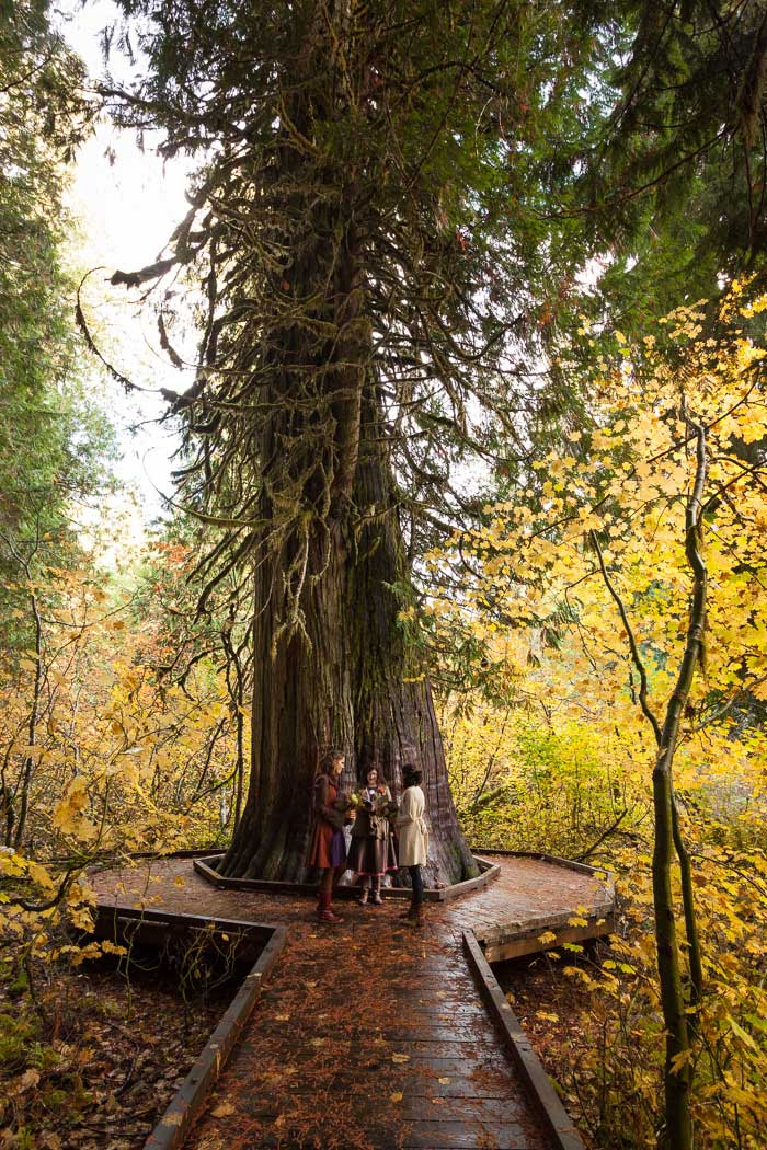 Mount Rainier elopement ceremony