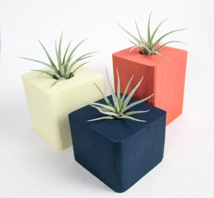 Geometric Plant Centerpieces
