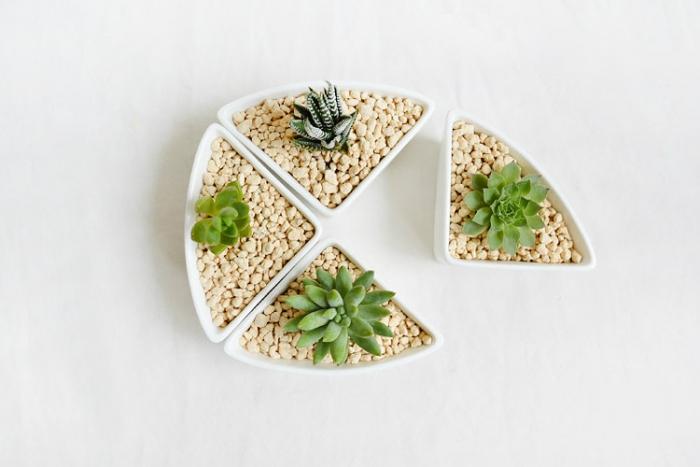 Cactus Planter Centerpieces