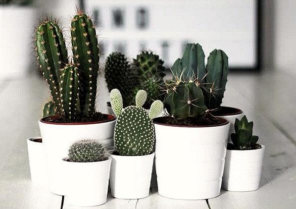 Various Cactus Planters