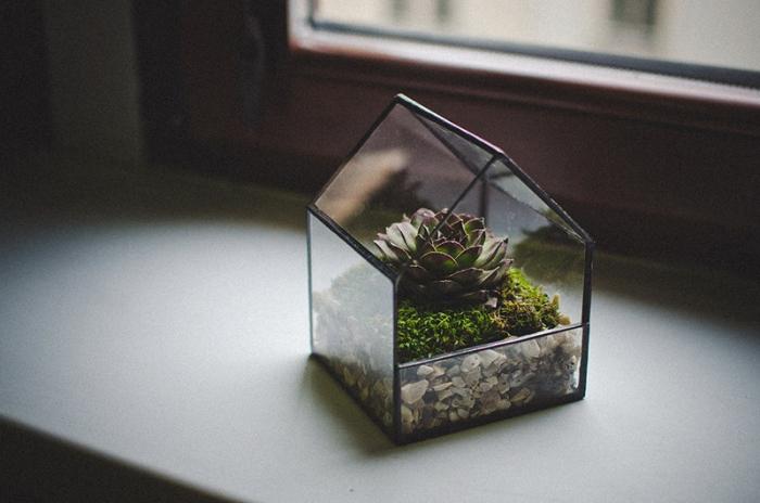 house terrarrium