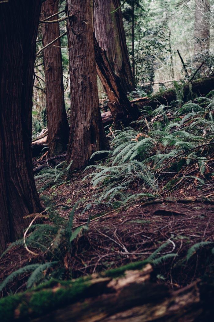 Washington National Forest