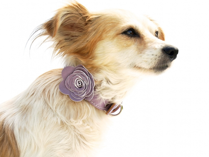 dog flower collar