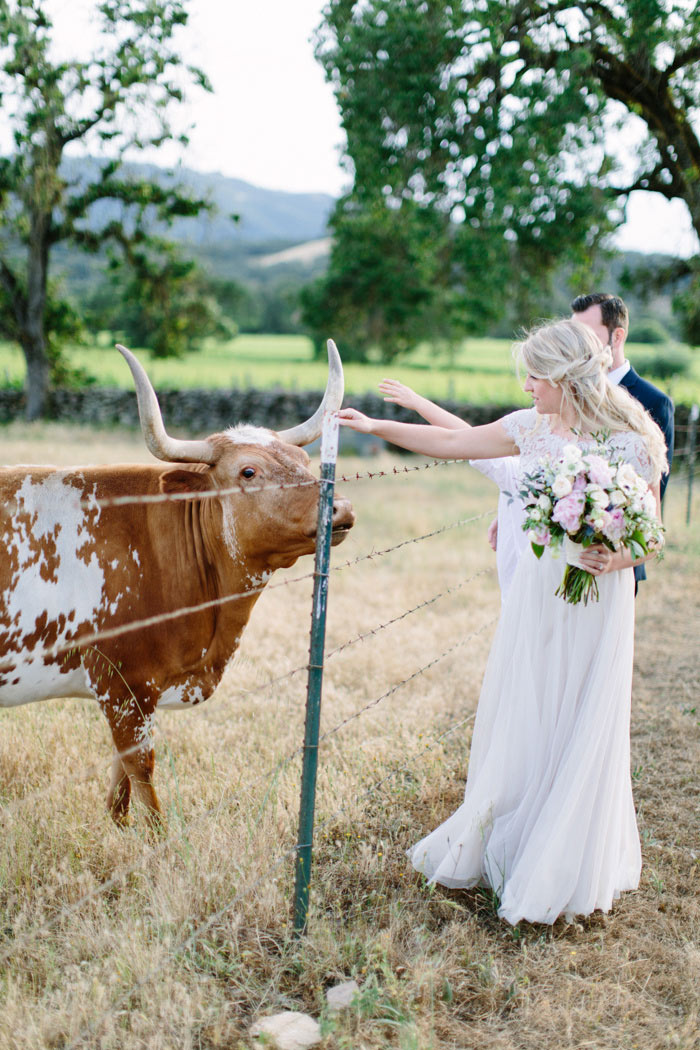 bride and groom petting cows