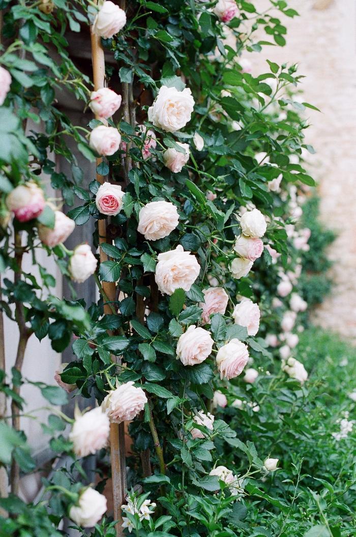 florence-tuscany-intimate-wedding-rachel-joseph-43
