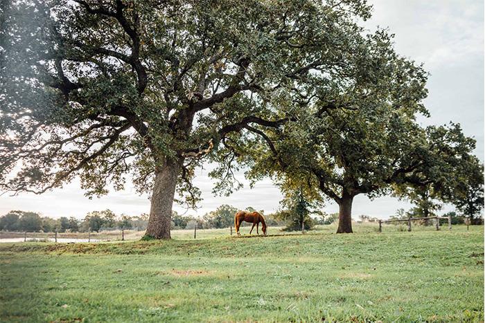horseeating
