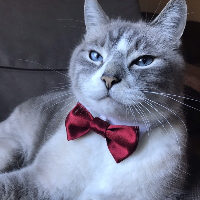 cat wedding outfit