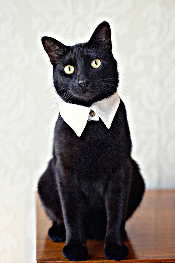 cat collar etsy