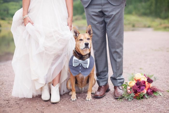 dog tuxedo wedding